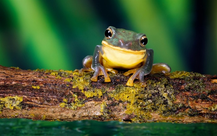 frog bright-Natural animal Wallpaper Views:7353 Date:3/21/2013 11:11:23 AM