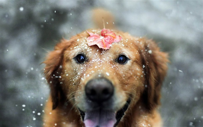 let the winter begin-Animal World HD wallpaper Views:4472