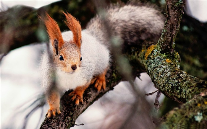 nimble squirrel-Animal World HD wallpaper Views:5165