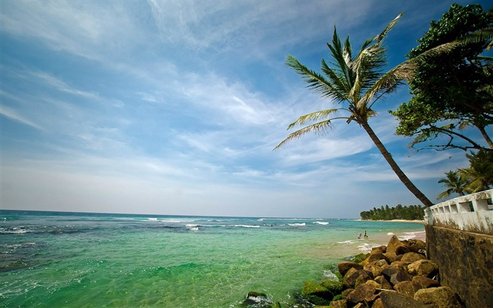 palm tree coast stones-Natural scenery HD wallpaper Views:3964