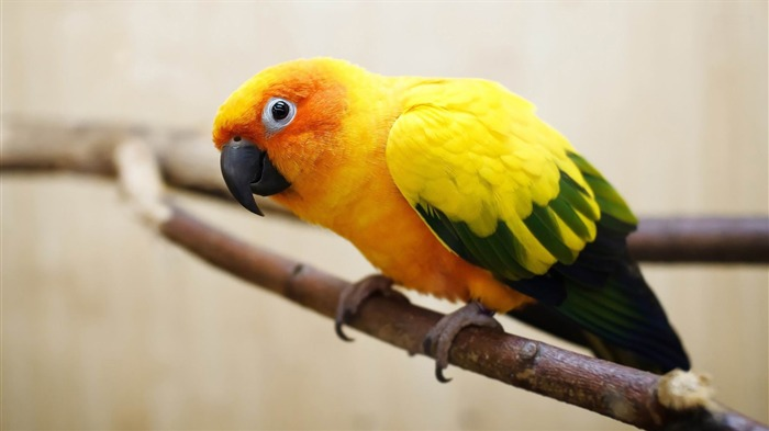 parrot-ecological animal desktop wallpapers Views:3260