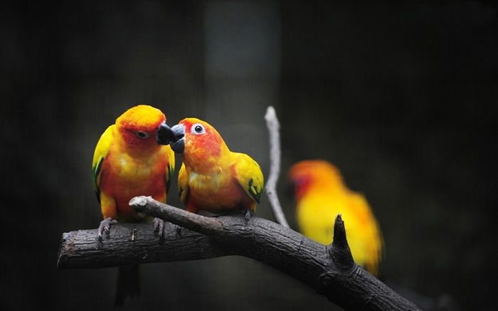 parrot birds-Natural animal Wallpaper Views:5167 Date:3/21/2013 11:16:44 AM