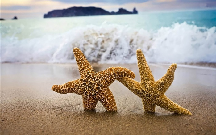 starfish couple-ecological animal desktop wallpapers Views:2724