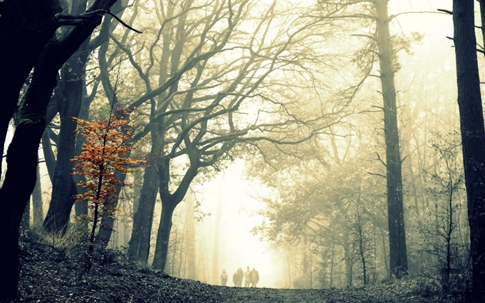 wood fog tree leaves yellow autumn-Natural landscape HD wallpapers Views:2939