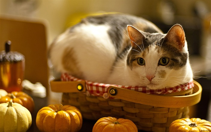 Cat in the basket-high quality desktop HD wallpaper Views:3416
