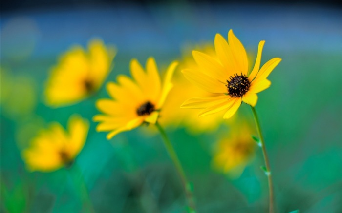 Hazy yellow flowers-flower photography wallpaper Views:3428