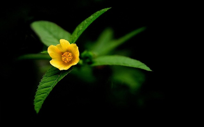 Yellow wildflowers Macro-flower photography wallpaper Views:3740