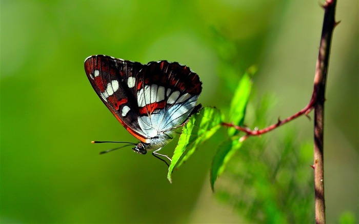 butterfly-Animal world photography wallpapers Views:3066
