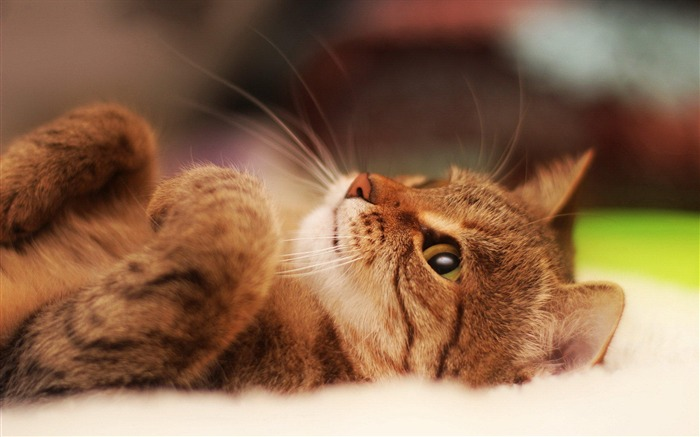 Cute cat-Animal photography wallpaper Views:15317