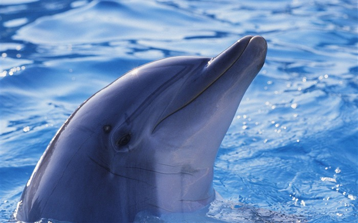 Lovely dolphins-Animal photography wallpaper Views:3939