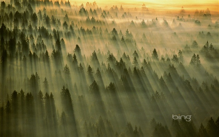 Vast forest-May 2013 Bing wallpaper Views:4022