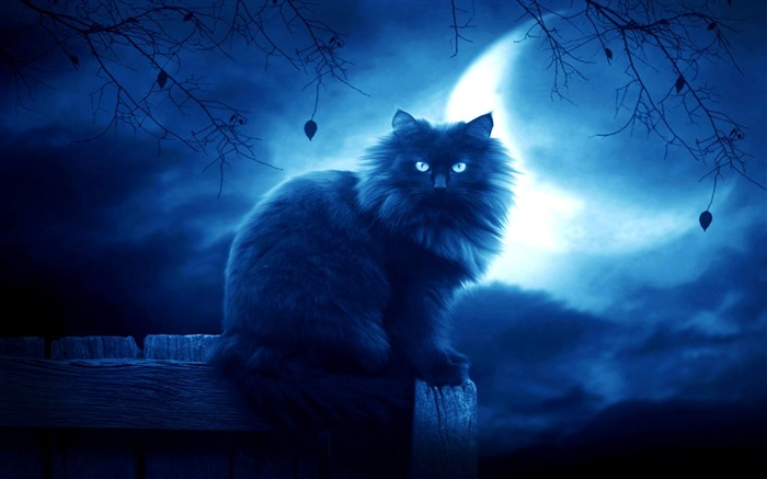 cat black moon night silhouette outlines-Fantasy design HD wallpaper Views:4077