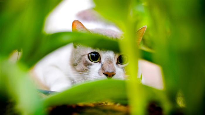 hiding cat-Animal World Photography wallpaper Views:2672