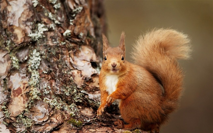 squirrel-Animal World Photography wallpaper Views:3370