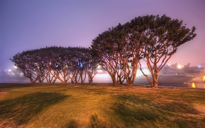 trees in san diego-High quality HD Wallpaper Views:2870