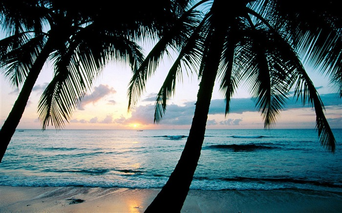 Beach with palm trees-Summer landscape wallpaper 02 Views:4510