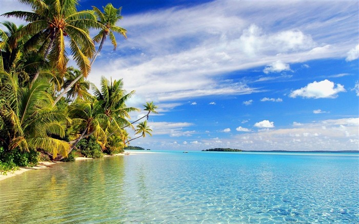 Beach with palm trees-Summer landscape wallpaper Views:27890