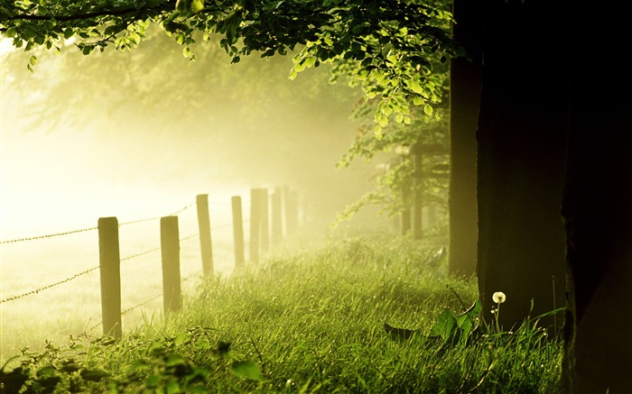 Woods early in the morning mist-Nature Landscape wallpaper Views:3498