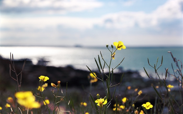 Yellow flowers-Attractive scenery wallpaper Views:3336