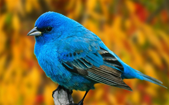 Nature bird photography theme HD wallpaper Views:16899