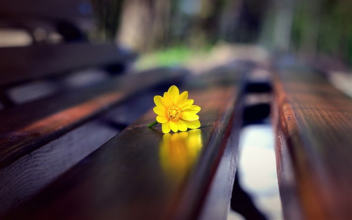 Title:flower bench close up-Plant Macro HD wallpaper Views:6550