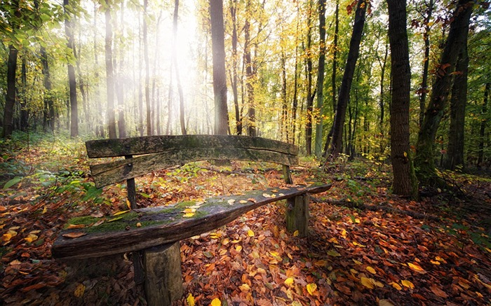 old timber bench-Landscape photography wallpaper Views:3846