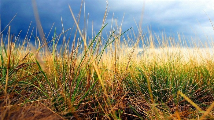 tall grass-Landscape photography wallpaper Views:2236