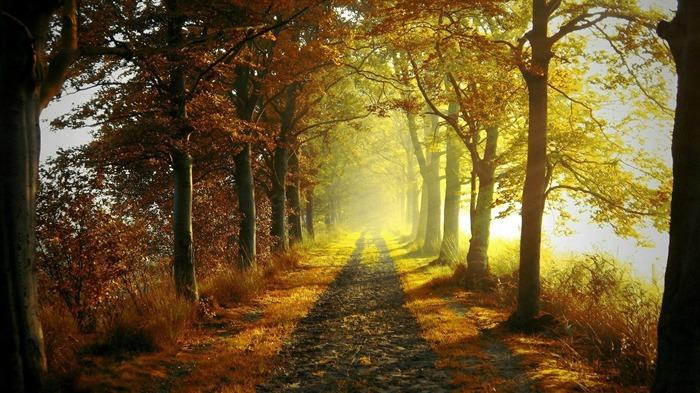 秋天树林小路-自然风景高清壁纸 预览