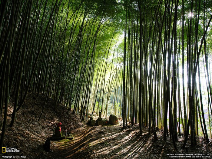 Bamboo Forest Japan-National Geographic wallpaper Views:9419