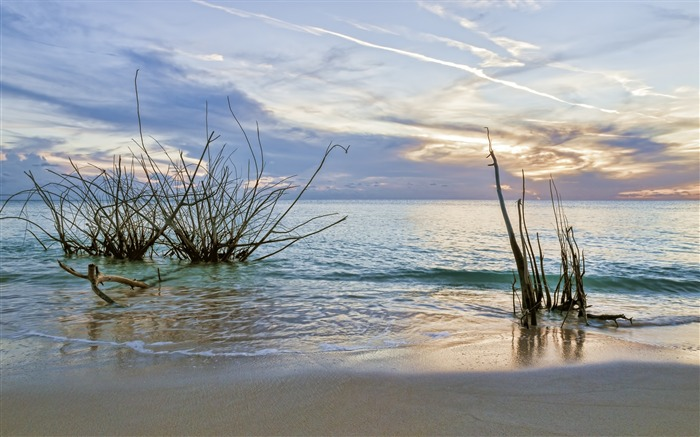 Beach weeds-Summer landscape HD wallpaper Views:1979