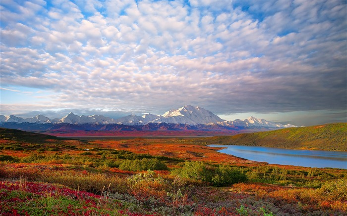 Denali National Park Beautiful Landscape HD Wallpaper Views:17968