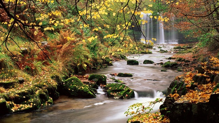 forest stream-Beautiful scenery wallpaper Views:7592
