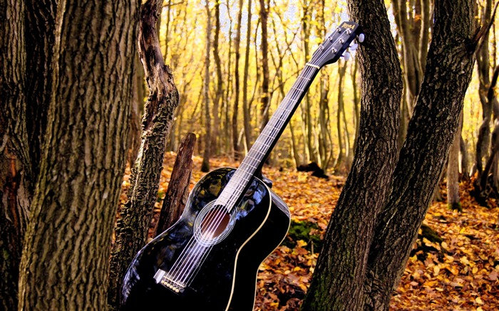 forrest guitar-Music theme wallpaper Views:3804