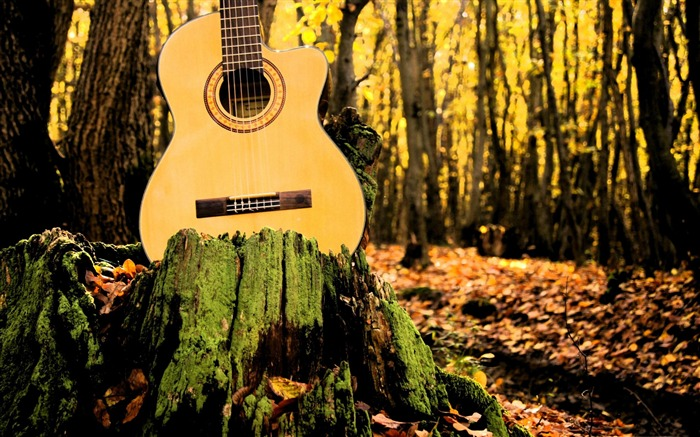 forrest guitar-Music theme wallpapers Views:4665