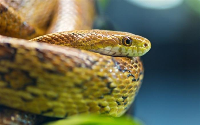 标题:眼睛蛇鳞-动物高清照片壁纸浏览:848