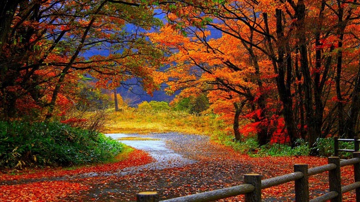 trail in autumn forest-Beautiful scenery wallpaper Views:33492