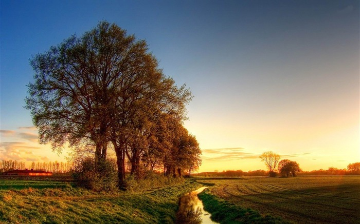 trees in the field-Beautiful scenery wallpaper Views:3017