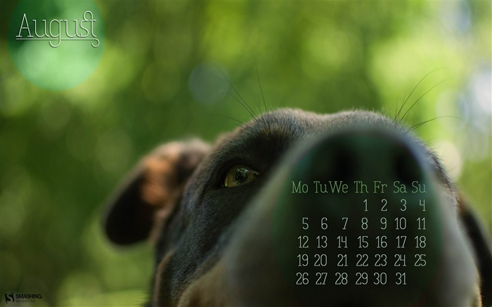 Woof-August 2013 calendar wallpaper Views:2045