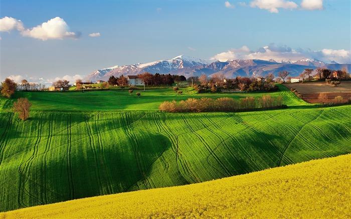 绿色的田野-风景高清壁纸 预览
