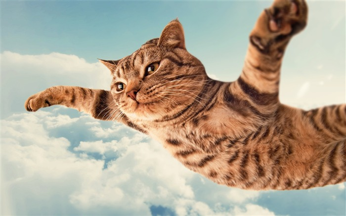 i belive i can fly-HIGH Quality Wallpaper Views:3158