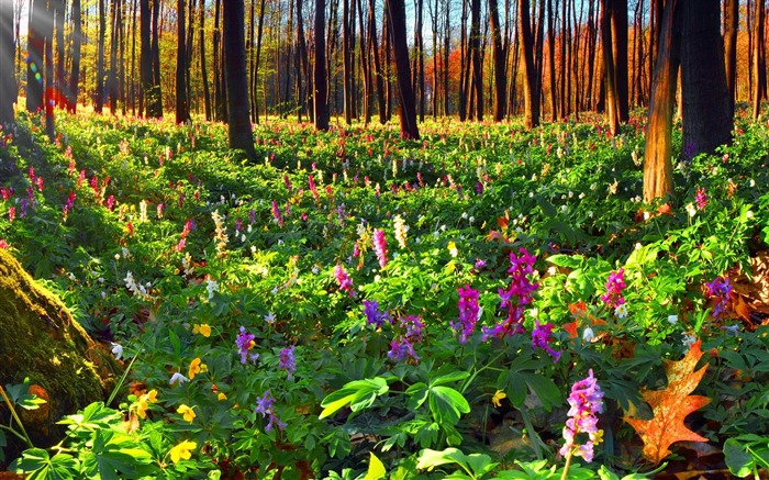 summer flowers in the forest-Best Scenery HD Wallpaper Views:2027