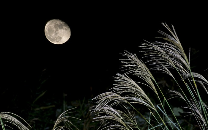 Bright moon-Mid-Autumn Festival Landscape Wallpaper 06 Views:3681