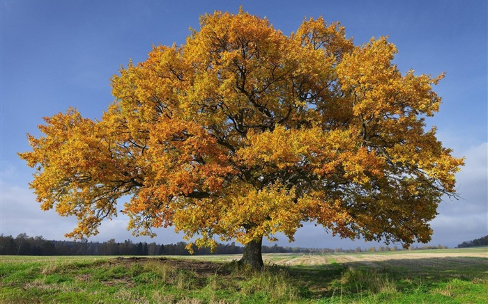 Sweden seasons natural beauty HD Wallpaper 06 Views:2738