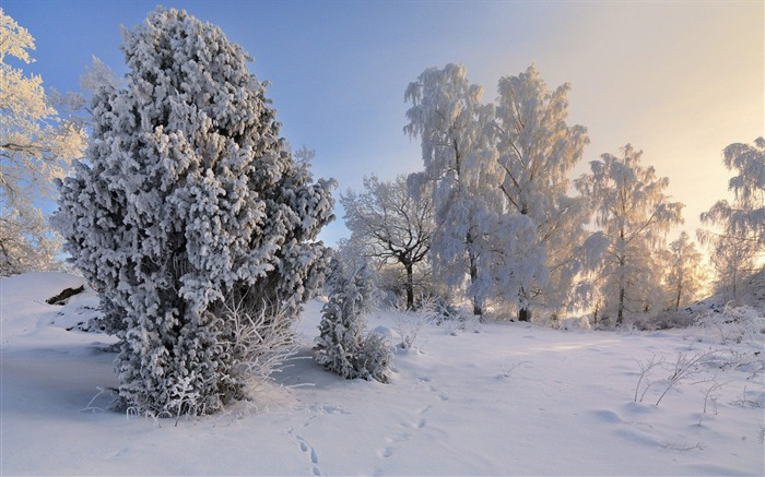 Sweden seasons natural beauty HD Wallpaper 18 Views:1381