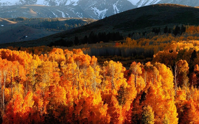 Autumn trees gold mountains-Landscape HD Wallpaper Views:3865