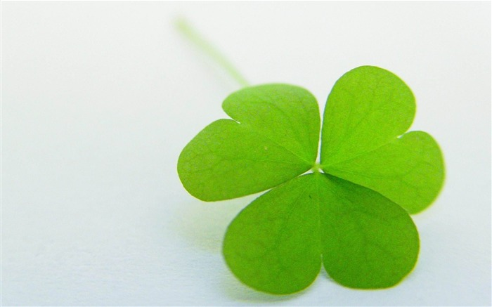 clover shaped leaf green-Romantic HD Wallpaper Views:4413