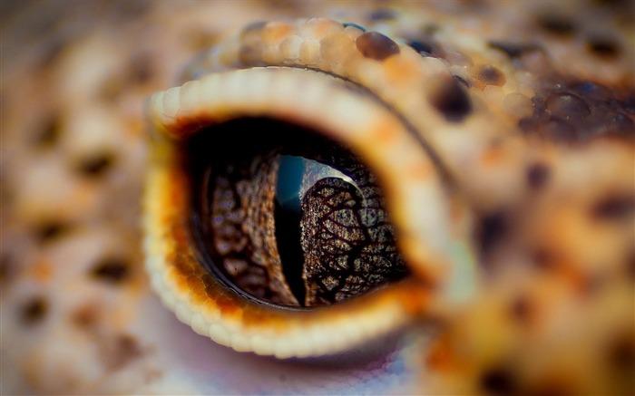 鳄鱼的眼睛眼睑-动物高清壁纸