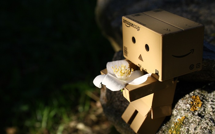 Title:flower stone-Danbo Photography Wallpaper Views:2075