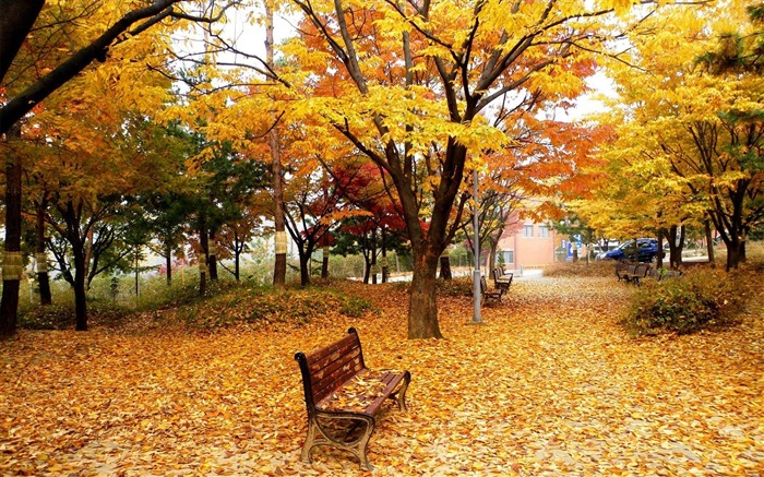 Classic golden autumn scenery HD wallpaper Views:18108