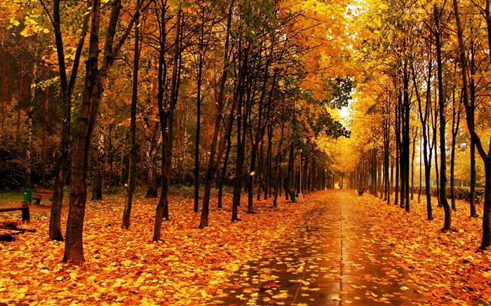 Autumn beautiful Nature scenery wallpaper Views:15029